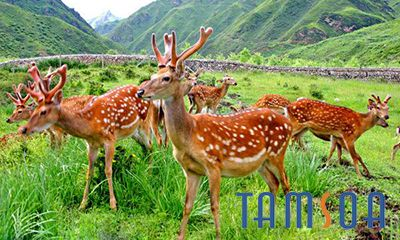 Địa chỉ bán nhung hươu uy tín chất lượng tại Lạng Sơn