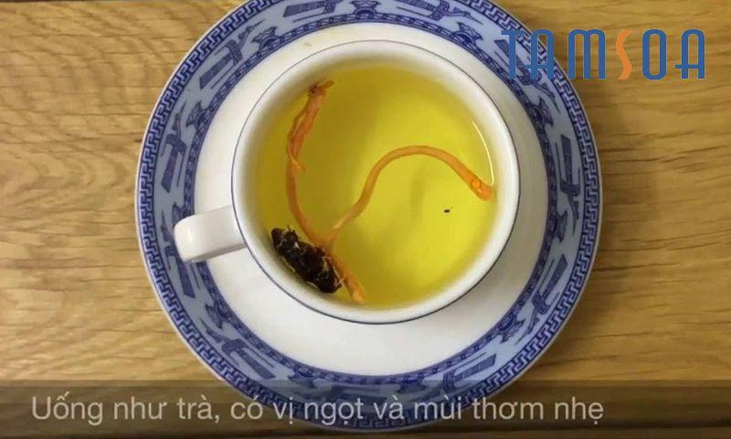 đông trùng hạ thảo pha trà