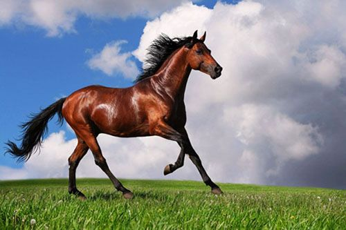 Tìm hiểu cao ngựa, cao ngựa có tác dụng gì?