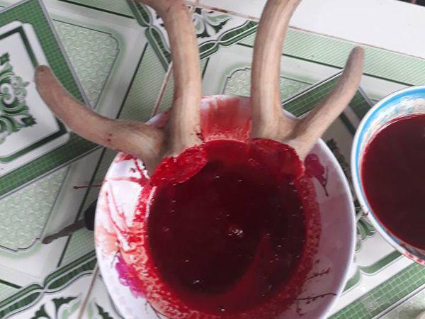 huyết nhung hươu