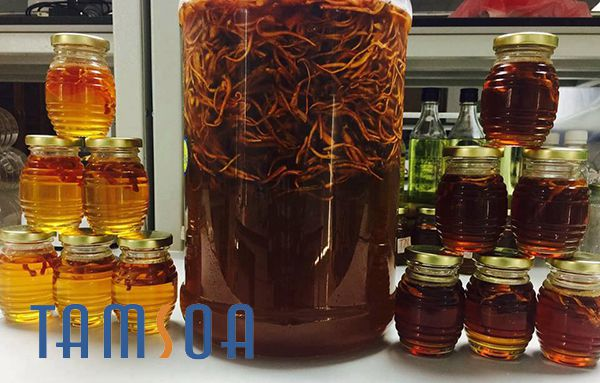 Hướng dẫn chế biến đông trùng hạ thảo ngâm mật ong đúng cách
