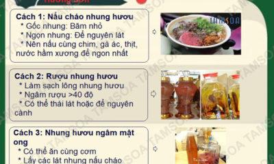 Rượu nhung hươu Hương Sơn Hà Tĩnh 2019