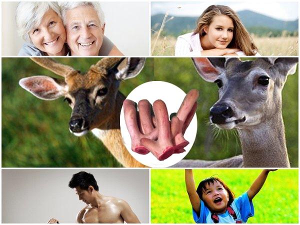 ăn nhung hươu có tác dụng gì