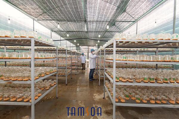 Phòng nuôi cấy đông trùng hạ thảo Thiên Phúc