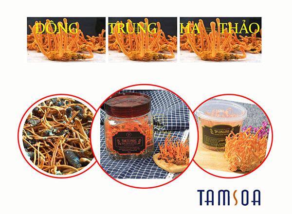 Phân loại Đông trùng hạ thảo Việt Nam