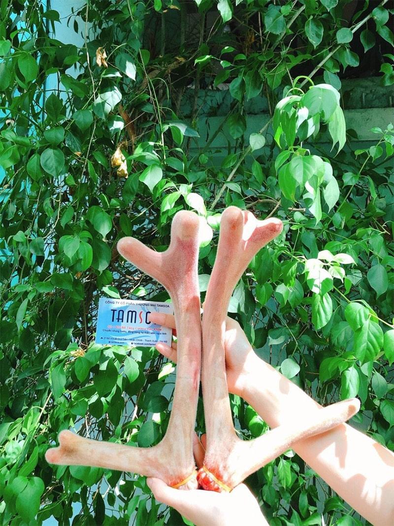 địa chỉ bán nhung hươu tại Hà Nội